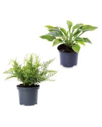 Easy Care Irish Grown Shaded Plants