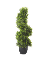 Cypress Topiary Spiral