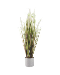 White Dog Tail Plant In Grey Pot