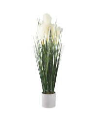 White Reed Tail Plant In Grey Pot