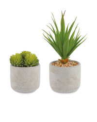 White Washed Succulent 2 Pack