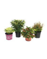 Christmas Planting Outdoor Plants