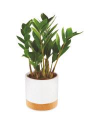 Foliage In Ceramic