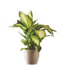 House Plant In Ceramic 13cm