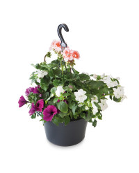 Irish Filled Hanging Basket
