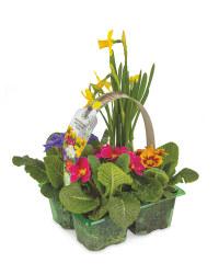 Irish Grown Primrose & Daffodil