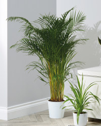 Large Green Indoor House Plants