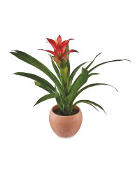 The Green Garden Bromeliad & Ceramic