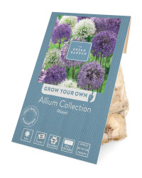 The Green Garden Mixed Allium Bulbs