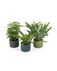 Trendy Ferns In Ceramic Pots